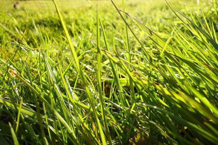 grass-3248614_1920